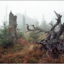 Mlha na Jizeře, autor: Ivan Ostaš