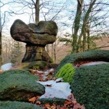 Kamenný hřib pod Špičákem, autor: Karel Mudra